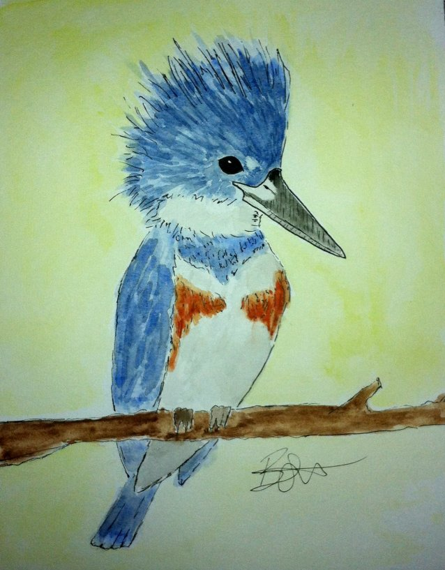 Study of a Belted Kingfisher